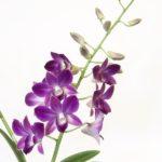 künstliche Orchideen