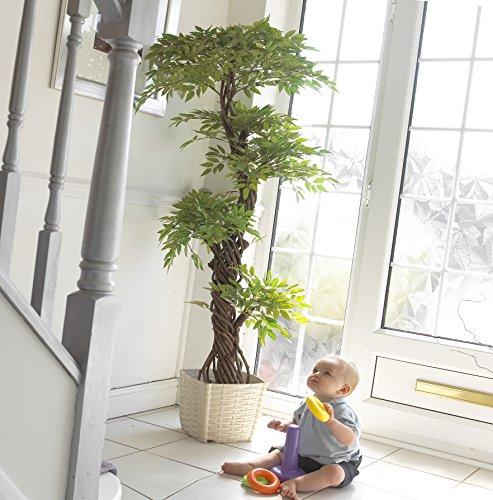 Stilvoller Japanese Fruticosa Tree