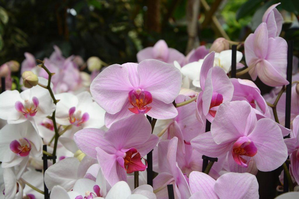 hochwertige künstliche Orchideen