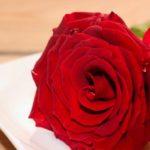 künstliche Rosen